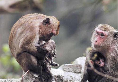 这可愁坏了中山公园动物园的饲养员,他们分析原因,分析来分析去,最后