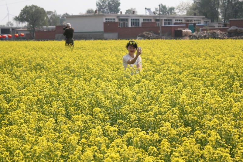 在辽宁省葫芦岛市兴城刘台子乡,2000亩油菜花海绽放着嫩黄花蕾,与柔柔