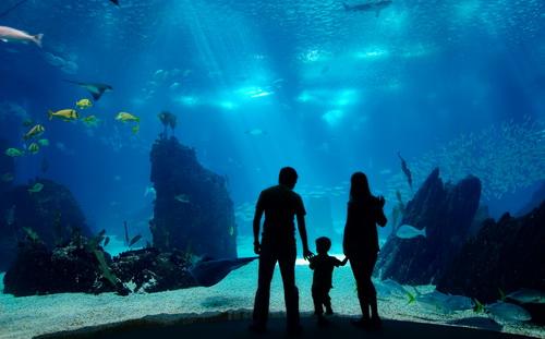 沈阳皇家海洋乐园看海豚表演