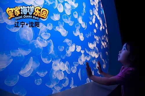 """沈阳皇家海洋乐园推出""""海洋馆奇妙夜"""""""