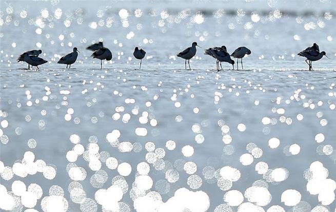 天津北大港湿地迎来大批迁徙候鸟