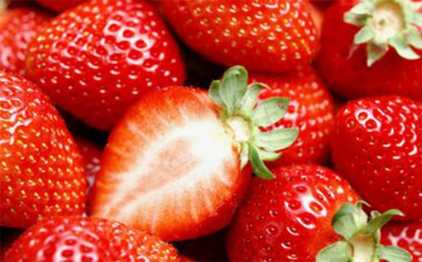 """鞍山腾鳌温泉草莓:""""泡温泉""""的草莓【2】"""